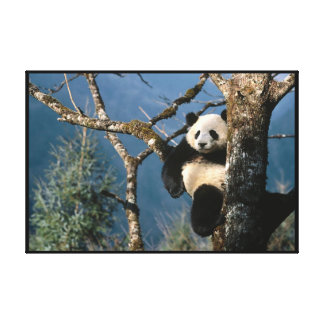 Panda In a tree Wrapped Canvas Print
