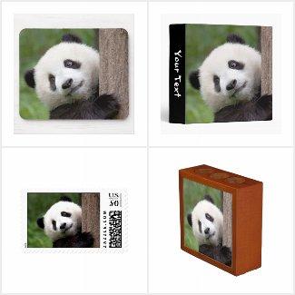Panda in the Office