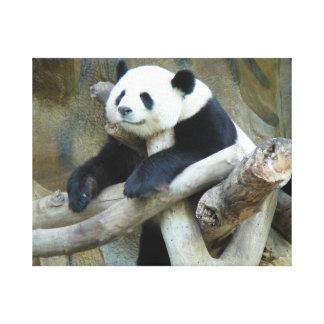 Panda Impresiones De Lienzo