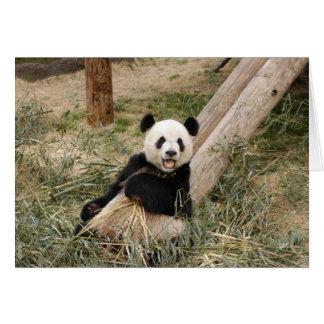 Panda M001 Greeting Card