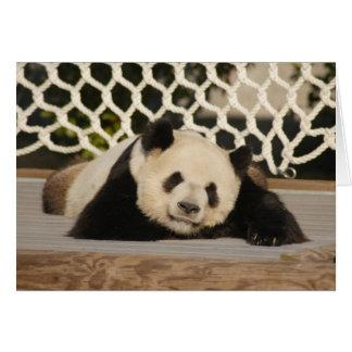 Panda M010 Greeting Card