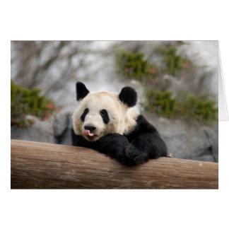 Panda M021 Cards