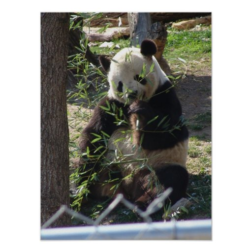 Panda Mania part II Print