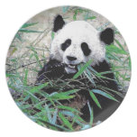 Panda Melamine Plate