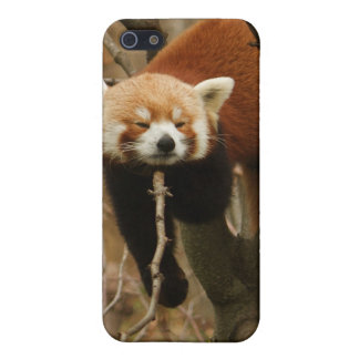 Panda Naptime Cases For iPhone 5