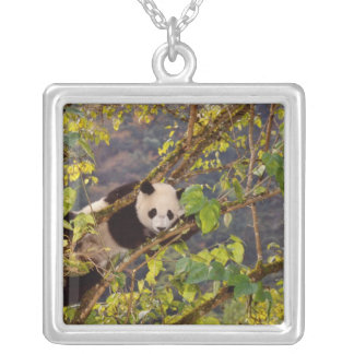 Panda on tree with autumn foliage, Wolong, Silver Plated Necklace