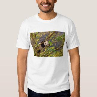 Panda on tree with autumn foliage, Wolong, T Shirt