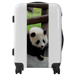 Panda Photograph Luggage