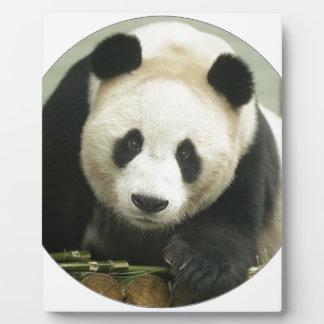 """""""Panda"""" Photo Plaques"""