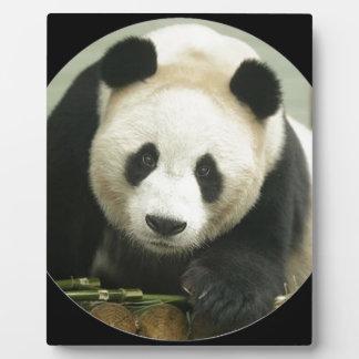 """Panda"" Display Plaques"