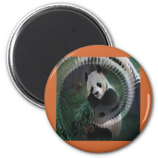 Panda Products Magnet