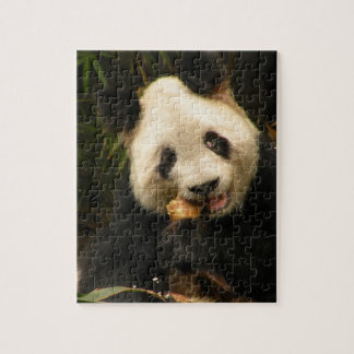 Panda Puzzle and Tin