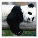 Panda que abraza el poste cojinete