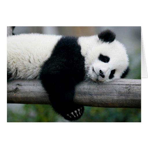 Panda que abraza el poste felicitaciones
