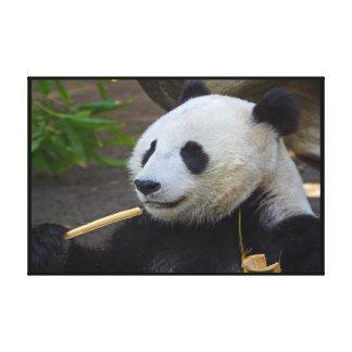 Panda que come el árbol de bambú envuelto lona estirada galerias