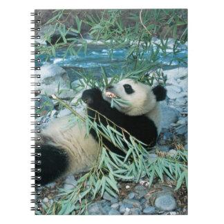 Panda que come el bambú por la orilla del río, Wol Cuadernos