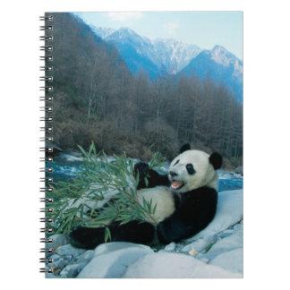 Panda que come el bambú por la orilla del río, Wol Cuaderno