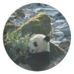 Panda que come el bambú por la orilla del río, Wol Platos De Comidas