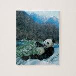 Panda que come el bambú por la orilla del río, Wol Rompecabezas Con Fotos