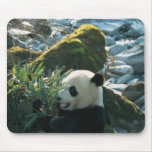 Panda que come el bambú por la orilla del río, Wol Alfombrilla De Ratones