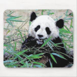 Panda que come las hojas tapete de raton
