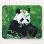 Panda que come las hojas tapete de ratones