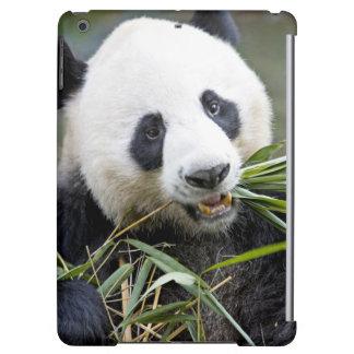 Panda que come los brotes de bambú Alluropoda 2