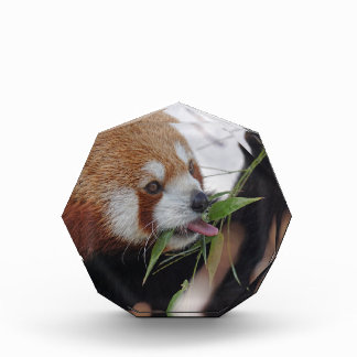 panda red animal print cute acrylic award