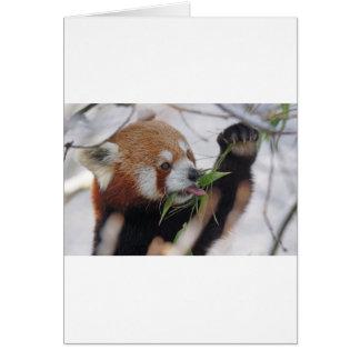 panda red animal print cute card