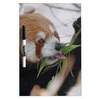 panda red animal print cute dry erase board