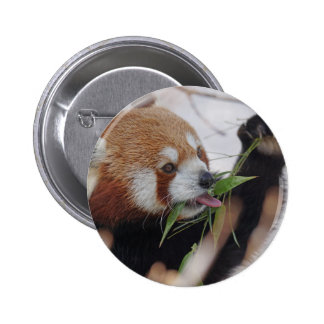 panda red animal print cute pinback button