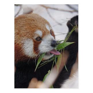 panda red animal print cute postcard