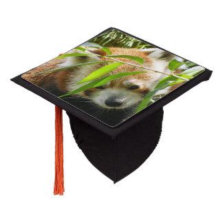 Panda roja 415P2