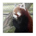 Panda roja azulejo ceramica