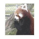 Panda roja bloc