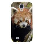 Panda roja china