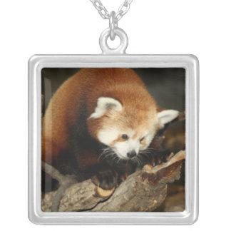 Panda roja pendiente