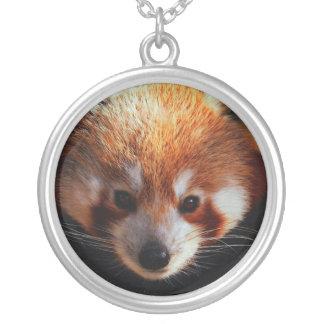 panda roja grimpolas