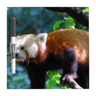 Panda roja con una cara linda pizarras blancas de calidad