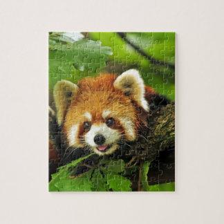 Panda roja Cub Rompecabeza
