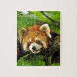 Panda roja Cub Rompecabezas