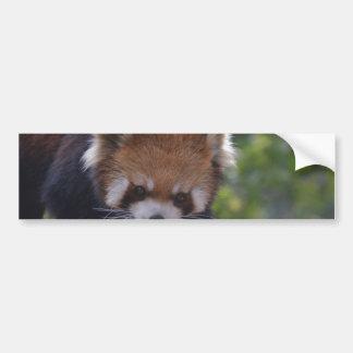 Panda roja de vagabundeo pegatina para auto