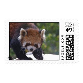 Panda roja de vagabundeo sellos