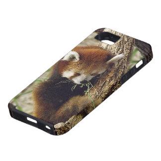 Panda roja el dormir lindo con la comida en su boc iPhone 5 fundas
