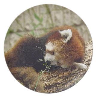 Panda roja el dormir lindo con la comida en su boc platos