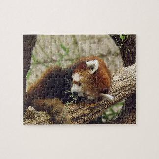 Panda roja el dormir lindo con la comida en su boc rompecabezas