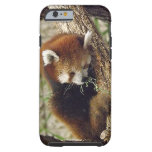 Panda roja el dormir lindo con la comida en su funda de iPhone 6 tough