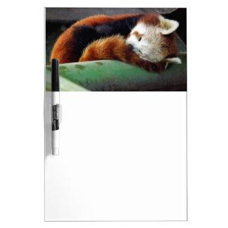 Panda roja el dormir pizarras