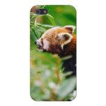 Panda roja en un ambiente verde iPhone 5 coberturas