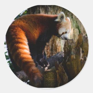 panda roja inquisitiva pegatina redonda